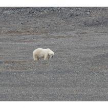 Sailing in Svalbard: Landscape